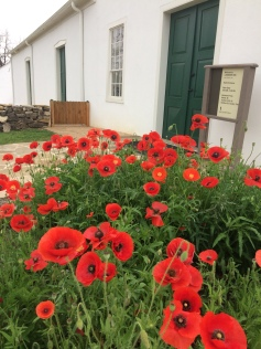 Poppies in front of Landmark Inn, Castroville TX